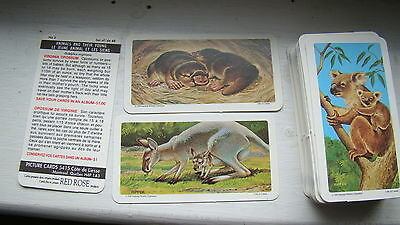 1990 Brooke Bond Lipton Animal & Their Young Tea Cards