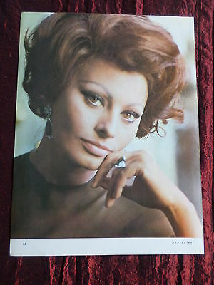 Sophia Loren - Film Star - 1 Page  Picture- Clipping/cutting -#4