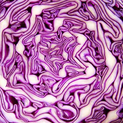 CABBAGE - RED DRUMHEAD - multiples of 7,500 seeds custom packed to order