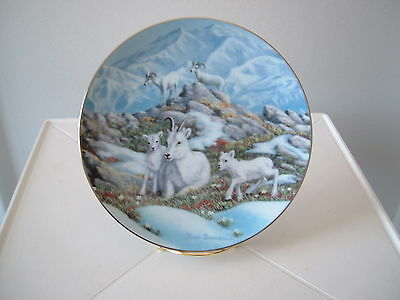 Bradford Limited Edition Spring on the Mountain – Dall Sheep