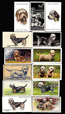 19 Different Vintage DANDIE DINMONT TERRIER Tobacco/Candy/Tea/Promo Dog Cards