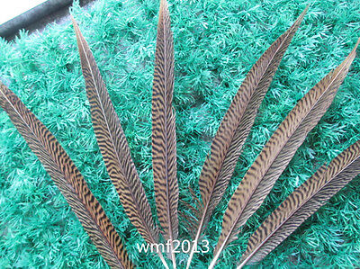 Wholesale beautiful natural golden pheasant feathers 6-14 inches / 15-35 cm