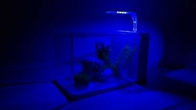 Mini-Aquarium Nano Complet Aquarium +Filtre Anlage +LED & CLAIR DE LUNE!!!