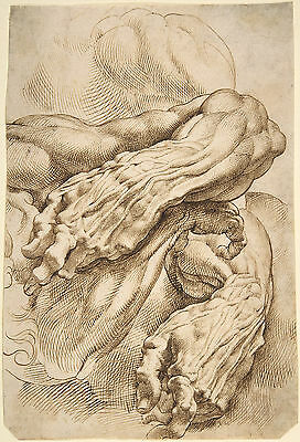 Peter Paul Rubens Drawing: Anatomical Study: Forearms - Fine Art Prints