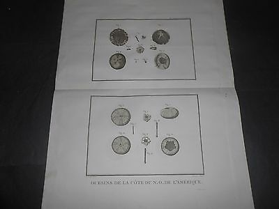 1797 Copper Engraving Zoological Urchins North America From Atlas De La Perouse