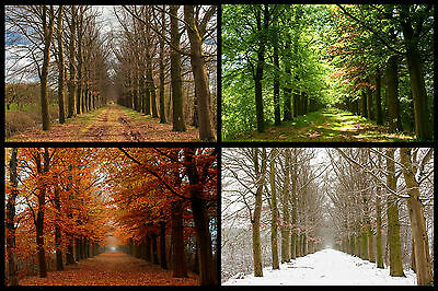 Four Seasons Trees Change WALL ART CANVAS FRAMED OR POSTER PRINT