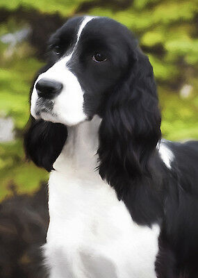 English Springer Spaniel Dog (Black) Note Cards (PACK OF 5)