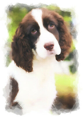 English Springer Spaniel Dog (Liver) Note Cards (PACK OF 5)