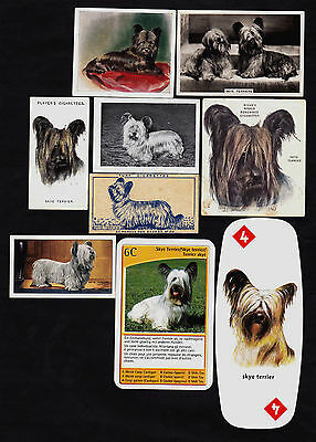 9 Different Vintage SKYE TERRIER Tobacco/Candy/Tea/Promo Dog Cards