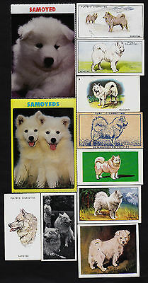 11 Different Vintage SAMOYED Tobacco/Candy/Tea/Promo Dog Cards