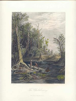USA,United States «The Chickahominy» Drawing W.L Sheppard. Engraving W Wellstood