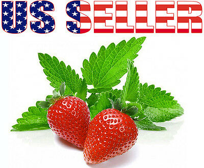 100+ ORGANICALLY GROWN Strawberry Mint Seeds Heirloom NON-GMO Fragrant Rare! USA