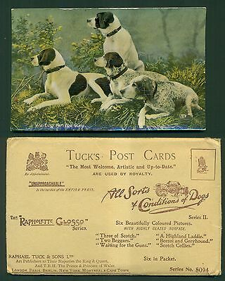 """1910 Raphael Tuck """"Waiting for the Guns"""" Hunting Dogs Postcard w/Advertising"""