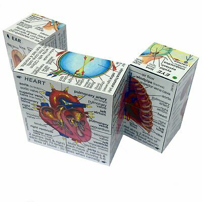 ZooBooKoo Human Body Cube Book - Children's Biology Facts Fiddle Science Toy