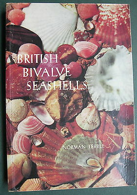 British Bivalve Seashells - Norman Tebble 1966