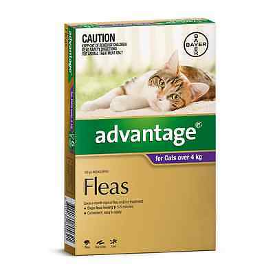 Advantage For Cats   Flea And Worming Purple (6 Pack)