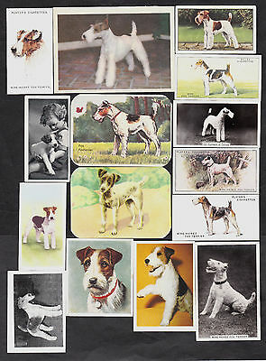 15 Different Vintage WIRE-HAIRED FOX TERRIER Tobacco/Candy/Tea/Promo Dog Cards