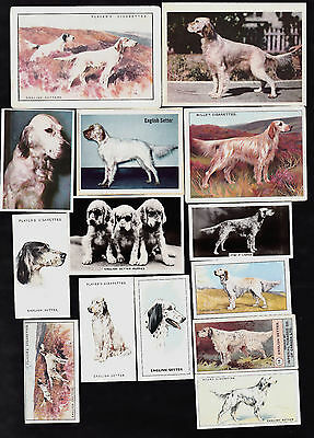 14 Different Vintage ENGLISH SETTER Tobacco/Candy/Tea/Promo Dog Cards