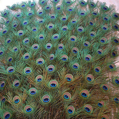 10 Pcs Beautiful Peacock Tail Feathers Floral Supplies DIY Decoration