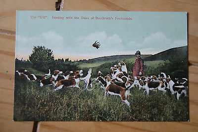 Early Duke Of Buccleuch Fox Hounds / Hunting Selkirk  Postcard