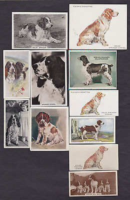 Lot of 12 Different Vintage WELSH SPRINGER SPANIEL Dog Cigarette Cards