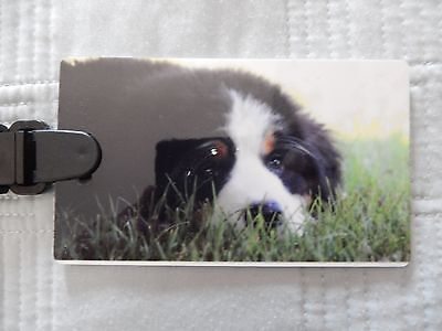 Bernese Mountain Dog Puppy TAG