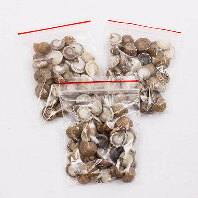 Lot of Mini 12mm Common Button Top Thai SEA SHELL Craft DIY Decorate Kit A1342