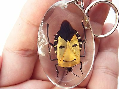 Insect Real Rare Keychain Wing Human Face Mask Men yellow Collectibles Gift Thai