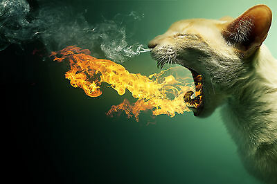 Cat Blowing Flames Fire Smoke Abstract WALL ART CANVAS FRAMED OR POSTER PRINT