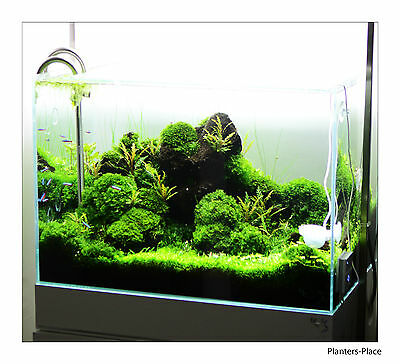 10 Portions of 10 Different live aquarium mosses. Best Quality Guaranteed