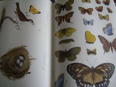 Birds And Butterflies Decorator Collection Decoupage Craft Book With Prints