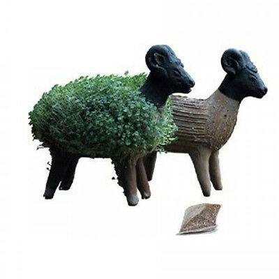Grow your Own Sheep! Fun, Eco Friendly Quirky Gift, Fairtrade