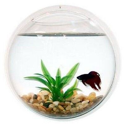 Fish Wall Mounted Bowl Aquarium Wall Hanging Tank Plant Decoration Bubble Bowl