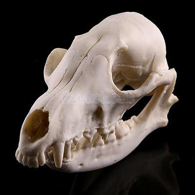 Realistic Fox Skull Replica Medical Teaching Skeleton Model Collectibles