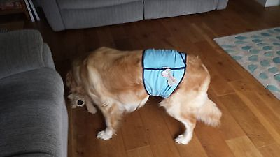 Reusable Male Dog Belly Wrap - incontinence / marking