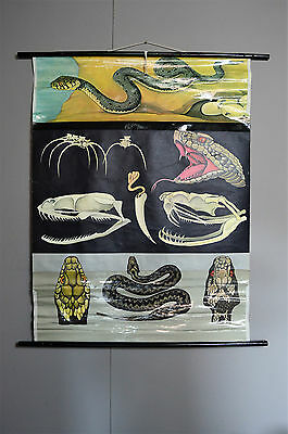 Vintage Retro Antique Medical Pull Down Anatomical School Poster Snakes