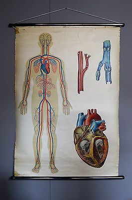 Vintage Retro Antique Medical Pull Down Anatomical School Poster Human