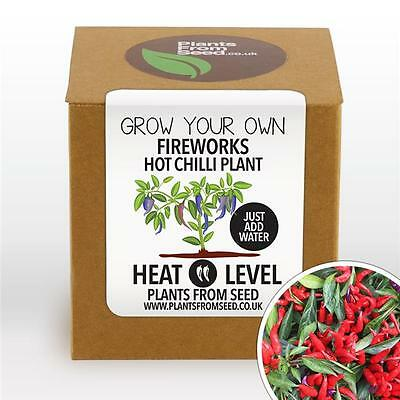 Plants From Seed - Grow Your Own Fireworks Chilli Pepper Plant Kit