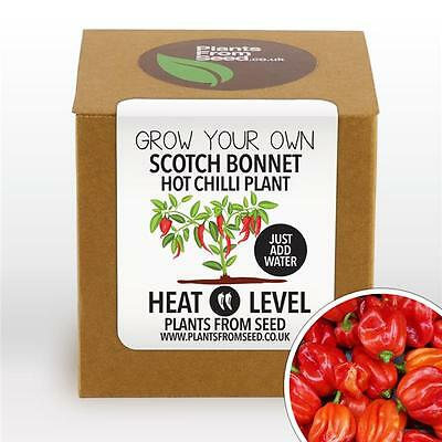 Plants From Seed - Grow Your Own Scotch Bonnet Chilli Plant Kit