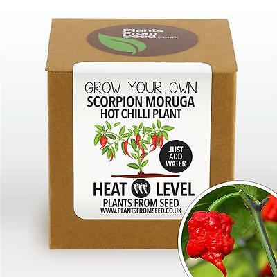 Plants From Seed - Grow Your Own Scorpion Moruga Chilli Plant Kit