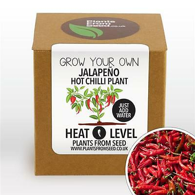 Plants From Seed - Grow Your Own Jalapeno Chilli Plant Kit