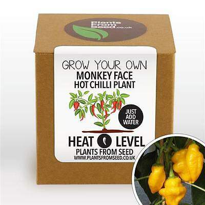 Plants From Seed - Grow Your Own Monkey Face Chilli Plant Kit