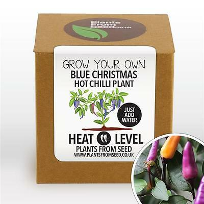 Plants From Seed - Grow Your Own Blue Christmas Chilli Plant Kit