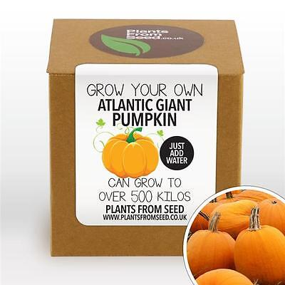 Plants From Seed - Grow Your Own Giant Atlantic Pumpkin Plant Kit