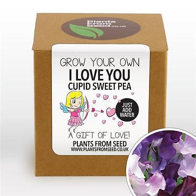 Plants From Seed - Grow Your Own Cupid Sweet Pea Plant Kit