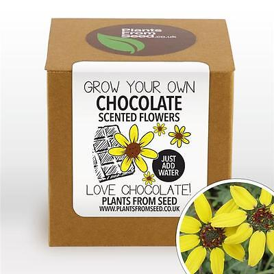 Plants From Seed - Grow Your Own Chocolate Scented Flowers Plant Kit