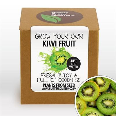 Plants From Seed - Grow Your Own Kiwi Fruit Plant Kit