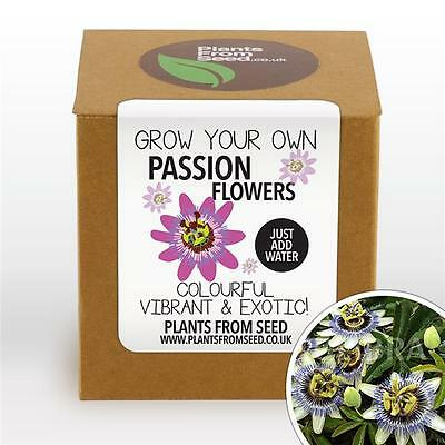 Plants From Seed - Grow Your Own Passion Flower Plant Kit