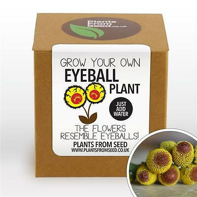Plants From Seed - Grow Your Own Eyeballs Plant Kit