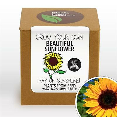 Plants From Seed - Grow Your Own Sunflower Plant Kit